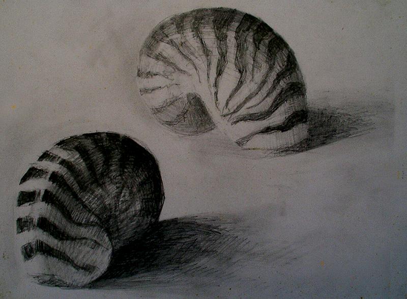 Etude coquillage - Atelier Christian Ruiz Vence